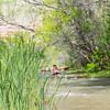 Verde River Institute Float Trip, Tapco to Tuzi, 4/28/17
