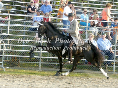 CLASS 10  FOUR YR OLD AMATEUR SPECIALTY