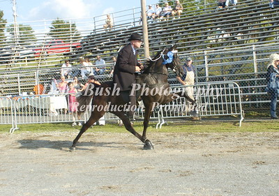 CLASS 2   TWO YR OLD OPEN SPECIALTY