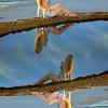 Beautiful Swimsuit Bikini Model Reflections Mirrored