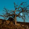Nikon D800E October Malibu Moon, Nature, Landscape, & Wildlife Photos!