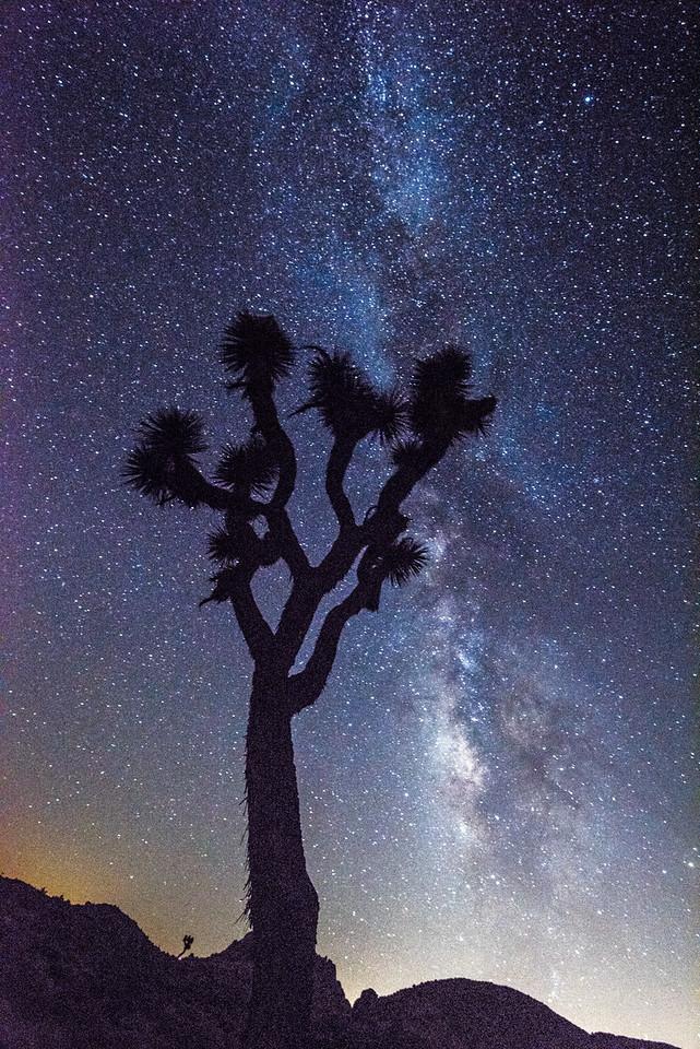 Joshua Tree Starry Night Astrophotography!  Nikon D810 Fine Art Night Milkyway Photography!