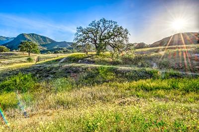 Malibu Spring Symphony of Green & Gold! Nikon D800E Dr. Elliot McGucken Fine Art Photography for Los Angeles Fine Art Gallery Show!