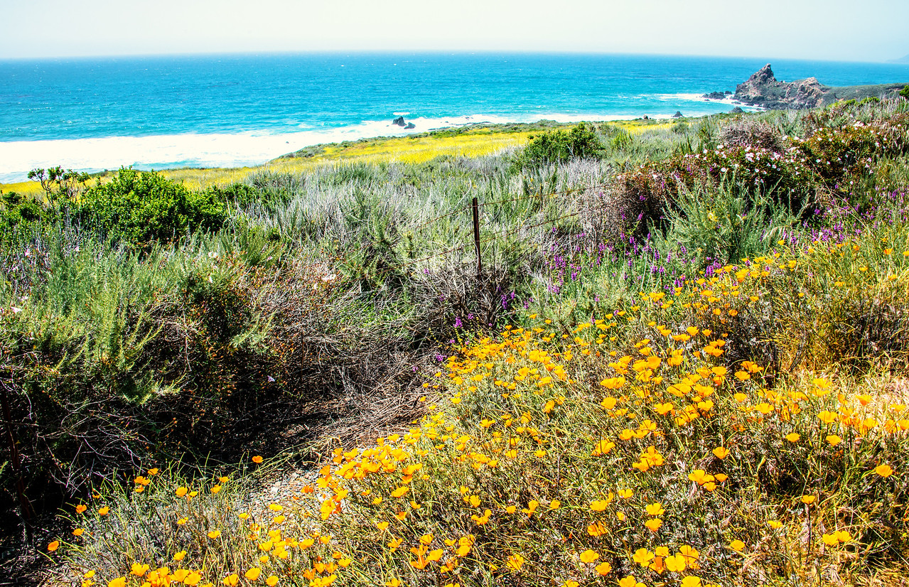 Big Sur Spring Wildflowers! Nikon D800E Dr. Elliot McGucken Fine Art Landscape & Nature Photography for Los Angeles Fine Art Gallery Show !