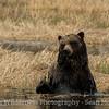 Bear Bath