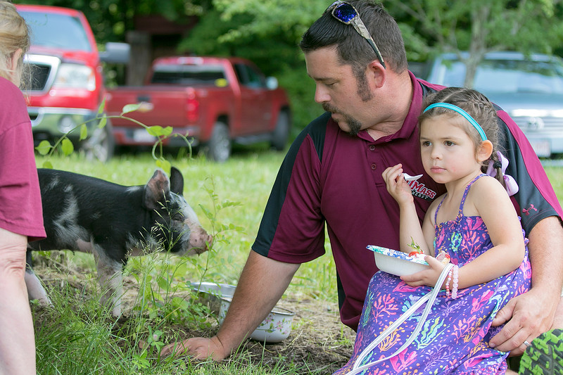 The 47th annual Tyngsboro-Dunstable Historical Society Strawberry Festival was held at the Sarah Tyng Little Red School House in Dunstable on Saturday, June 22, 2019. Bryan Conant from Tyngsboro brought his pig Candy to the festival from everyone to see. The farm where the pig lives is Conant's Custom Cuts in Dunstable. Hanging with Conant and enjoying some strawberry shortcake is his daughter Analise, 4. SENTINEL & ENTERPRISE/JOHN LOVE