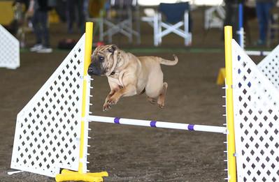 3-11-2017 Bloodhound-9607