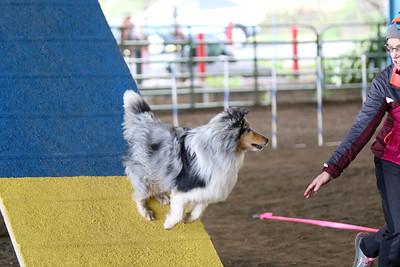 3-11-2017 Bloodhound-9601