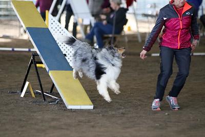 3-11-2017 Bloodhound-9606