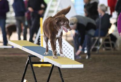 3-11-2017 Bloodhound-9611
