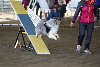 3-11-2017 Bloodhound-9605