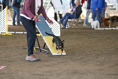3-11-2017 Bloodhound-9574