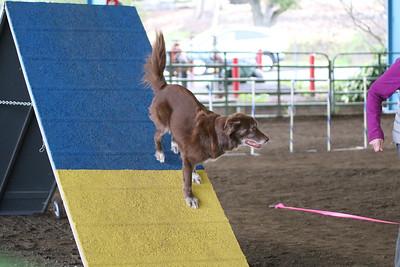 3-11-2017 Bloodhound-9617