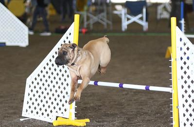 3-11-2017 Bloodhound-9608
