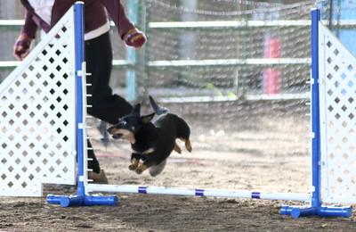 3-11-2017 Bloodhound-9565