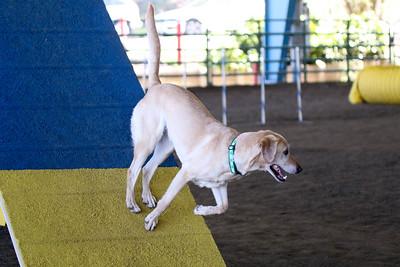 3-11-2017 Bloodhound-0591