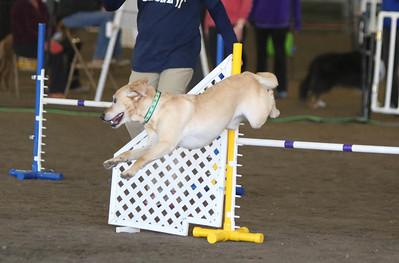 3-11-2017 Bloodhound-0605
