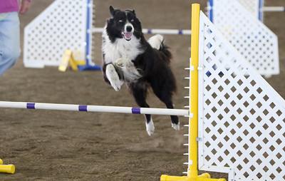 3-11-2017 Bloodhound-9827