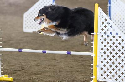 3-11-2017 Bloodhound-9821