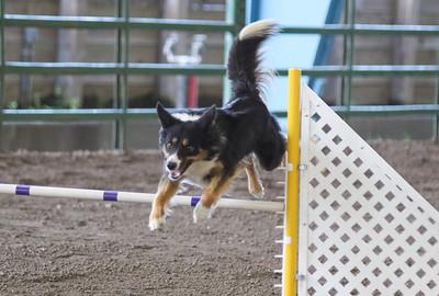 3-11-2017 Bloodhound-1736