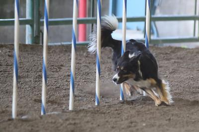 3-11-2017 Bloodhound-1731