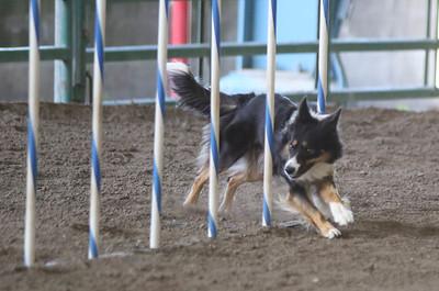 3-11-2017 Bloodhound-1730