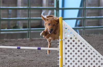 3-11-2017 Bloodhound-1723
