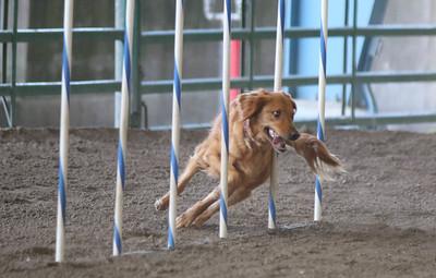 3-11-2017 Bloodhound-1712
