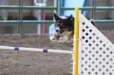 3-11-2017 Bloodhound-1735