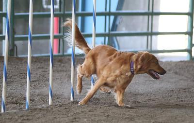 3-11-2017 Bloodhound-1711