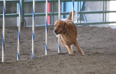3-11-2017 Bloodhound-1715