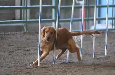 3-11-2017 Bloodhound-1719