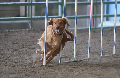 3-11-2017 Bloodhound-1720