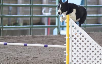 3-11-2017 Bloodhound-1706
