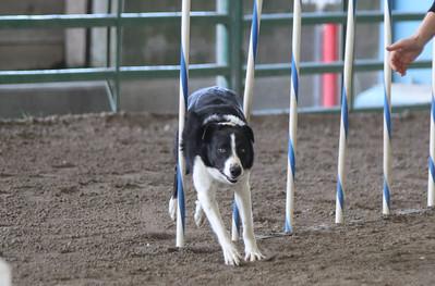 3-11-2017 Bloodhound-1705