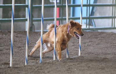 3-11-2017 Bloodhound-1713