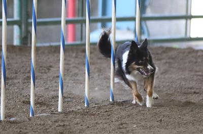 3-11-2017 Bloodhound-1728
