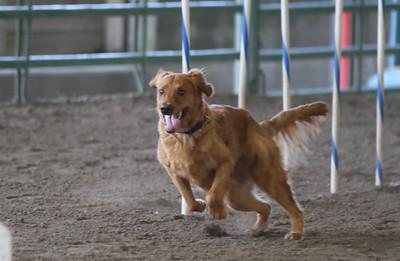 3-11-2017 Bloodhound-1721