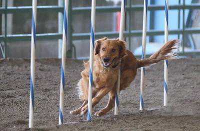 3-11-2017 Bloodhound-1716