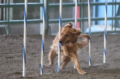 3-11-2017 Bloodhound-1717
