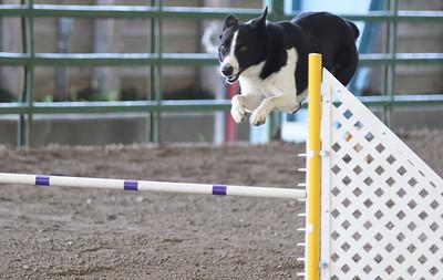 3-11-2017 Bloodhound-1707