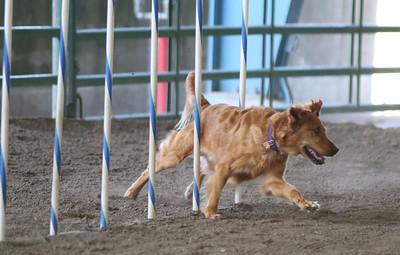 3-11-2017 Bloodhound-1710