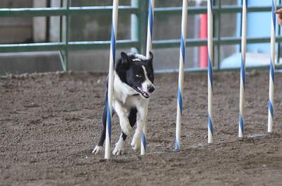 3-11-2017 Bloodhound-1704