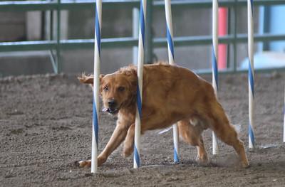 3-11-2017 Bloodhound-1718
