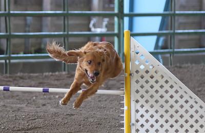 3-11-2017 Bloodhound-1724
