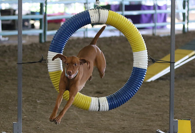 3-11-2017 Bloodhound-1919
