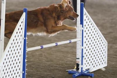 3-11-2017 Bloodhound-1923