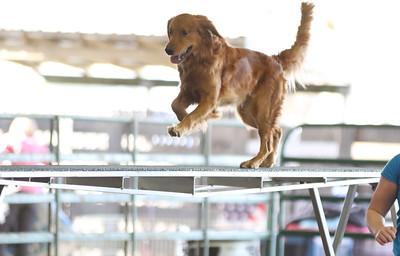 3-11-2017 Bloodhound-1929