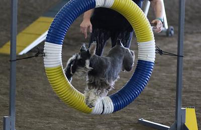 3-11-2017 Bloodhound-1905