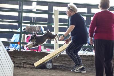 3-11-2017 Bloodhound-1899
